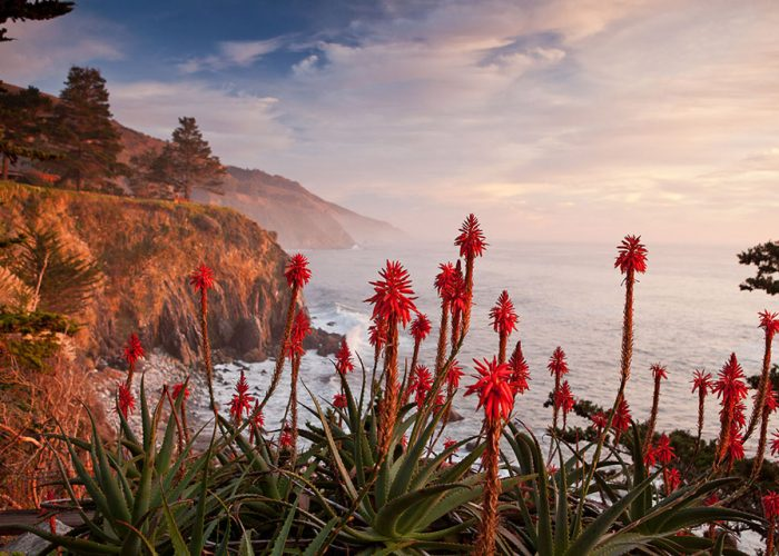 Esalen Institute Fall 2019