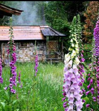 Foxglove at Breitenbush